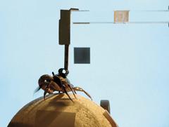 Dispositivo usado en el laboratorio del autor para sus experimentos con cangrejos Neohelice granulata. La armazón derecha y superior mantiene en el mismo sitio al animal pero le permite mover libremente sus patas apoyadas en una esfera flotante que puede rotar. En una pantalla se proyecta la imagen de computadora de un cuadrado negro, percibida por el animal como una amenaza que se le acerca, mientras la computadora registra la dirección y velocidad de su huida.
