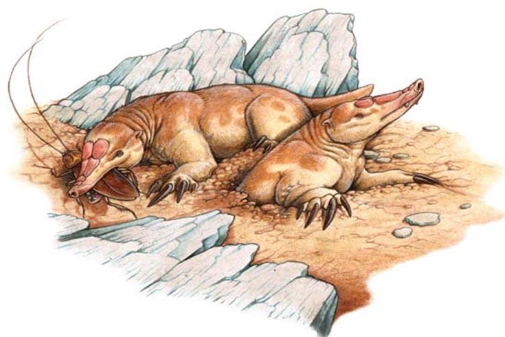 Necrolestes, un mamífero patagónico que sobrevivió a la extinción de los dinosaurios
