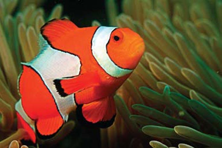 El cerebro de los peces y sus variadas formas de reproducción