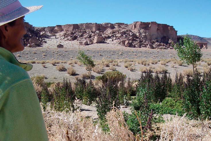 La quinua en las sociedades prehispánicas del noroeste argentino