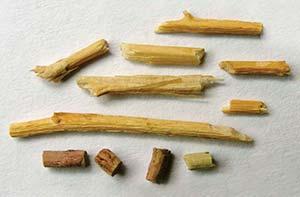 Fragmentos de las panojas de quinua de 1500 años de Punta de la Peña 9. La pieza más larga mide unos 2cm de largo.