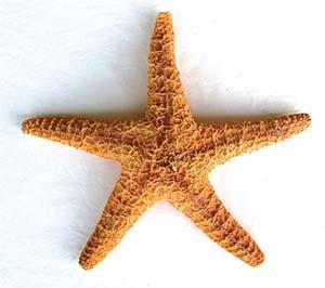 Estrella de mar.