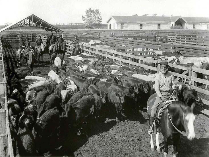 Mataderos de Liniers. Tropero y consignatarios de hacienda. Sociedad Fotográfica Argentina de Aficionados, ca. 1905, AGN.