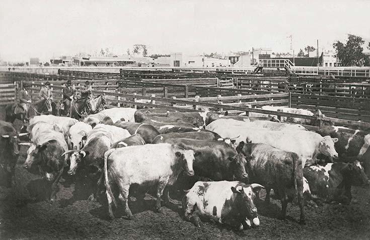 Mataderos de Liniers. Hacienda en corrales, 1913. Colección HL Pezzimenti, CEITPA.