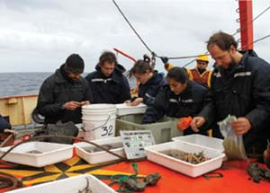 A bordo del buque oceanográfico Puerto Deseado, septiembre de 2013. Selección de organismos capturados con una draga a 2930m de profundidad en el cañón submarino de Mar del Plata. Foto Cristina Damborenea