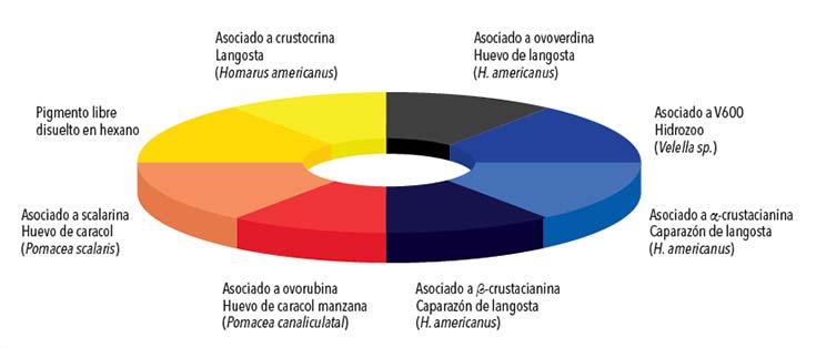 Cambios de color producidos por la combinación de astaxantina con diversas proteínas.