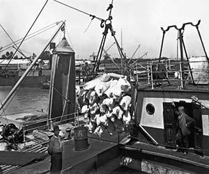 Embarque de carne congelada en el puerto de Buenos Aires. Si bien la guerra deterioró las exportaciones, sobre todo las de cereales que eran las más importantes, impulsó las de algunos rubros, como la carne y sus derivados. Foto HG Olds, 1910.