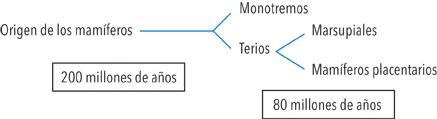 División de las subclases de mamíferos a lo largo de la evolución