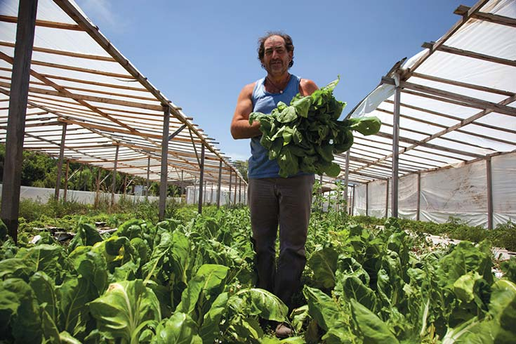 Políticas públicas para la agricultura familiar