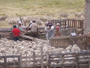 Consecuencias de la agricultura familiar sobre los recursos naturales: tensiones entre el discurso y la realidad