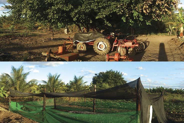 Agricultura familiar en América Latina en el contexto de las políticas dirigidas al sector