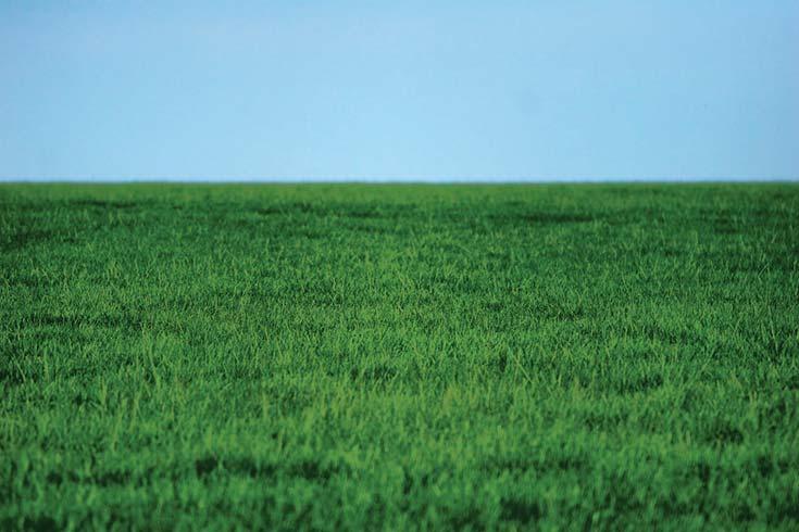 Diversidad de las organizaciones de la agricultura familiar en la Argentina
