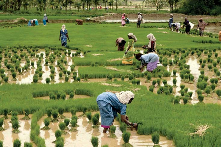 Individualismo o arroz