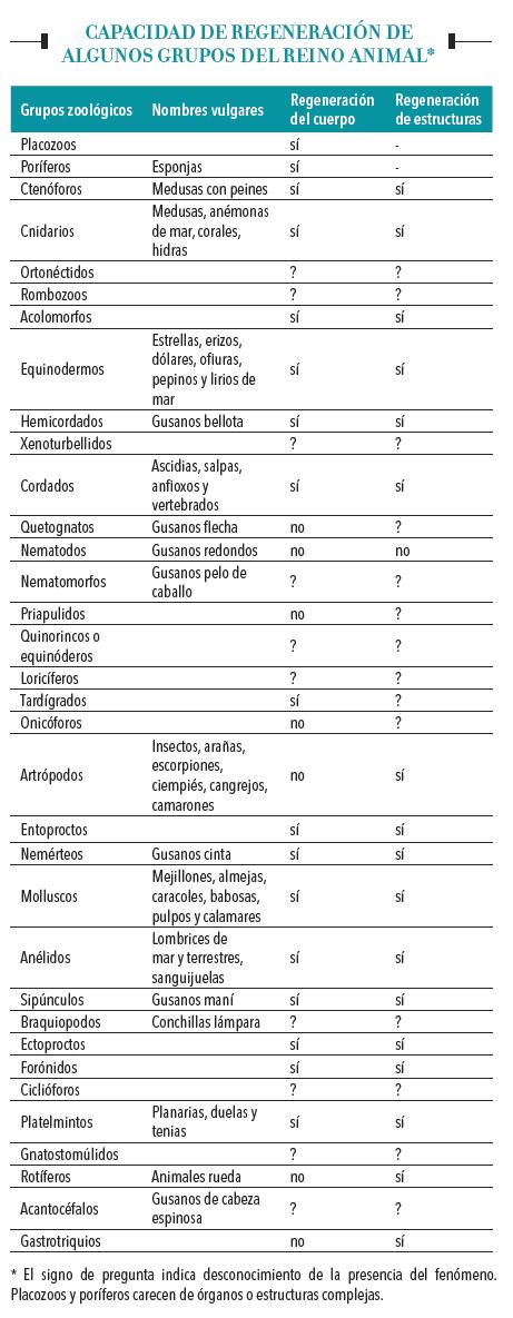 Capacidad de regeneración de algunos grupos del reino animal.