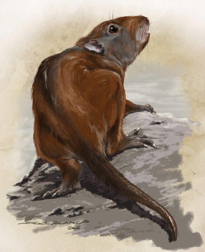 Interpretación del aspecto del gondwanaterio Sudamerica