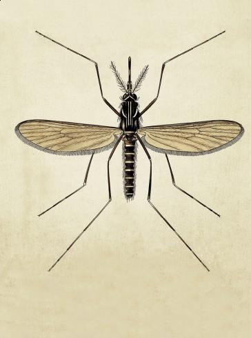 Aedes Aegypti portada