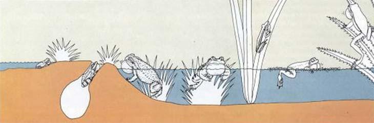 Esquema del hábitat que comparten los distintos anfibios del Delta bonaerense.