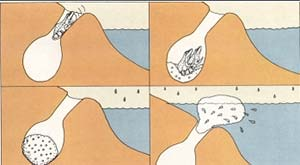 Las especies cavícolas realizan el amplexo dentro de la cueva. Junto con los huevos, la hembra deposita una sustancia albuminosa, que será luego batida por la pareja. El agua arrastrará al exterior el nido de espuma así formado.