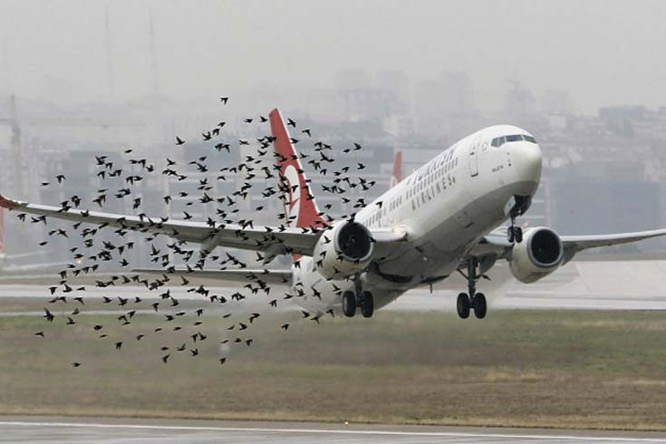 Aves-en-los-aeropuertos