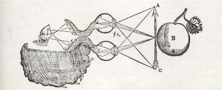 Fig. 3: Para Descartes, el cuerpo humano opera según principios mecánicos y se vincula con el alma inmaterial a través de la glándula pineal (H). En la figura, ella actúa como vehículo intermedio de la sensación de visión. (Del Tratado del hombre, publicado en 1664, después de su muerte.)