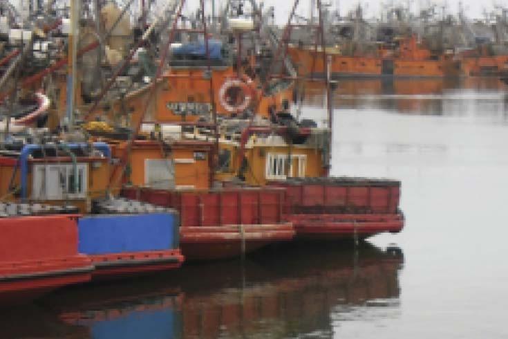 Contaminación costera y masculinización de caracoles marinos