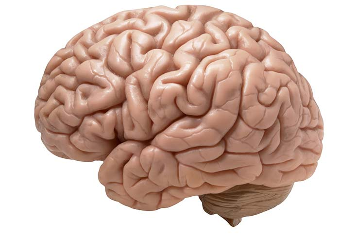 El cerebro humano: un mapa para gobernar a todos