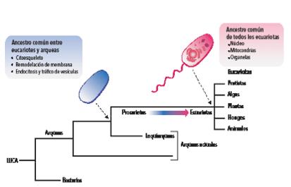 El origen evolutivo de las células eucariotas