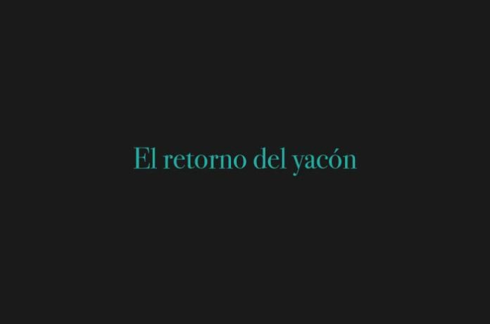 El retorno del yacón