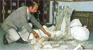 """En el museo """"Jorge H. Gerhold"""" de Ingeniero Jacobacci, cuyos orígenes se remontan a la colección privada de fósiles de Casamiquela."""