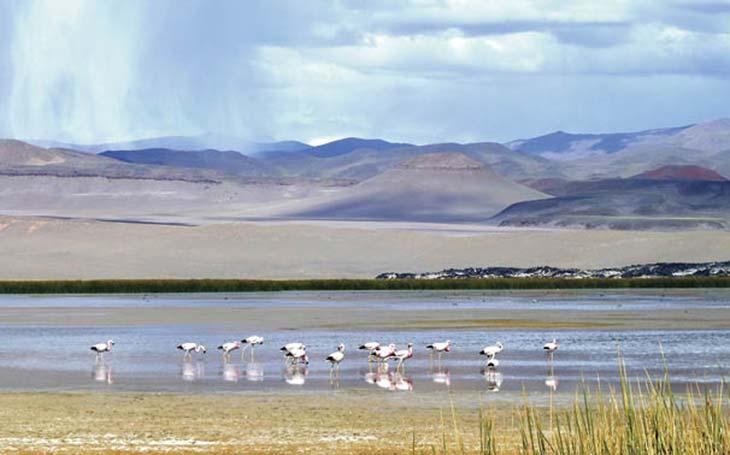 Laguna Antofagasta, Antofagasta de la Sierra. Foto D Frau