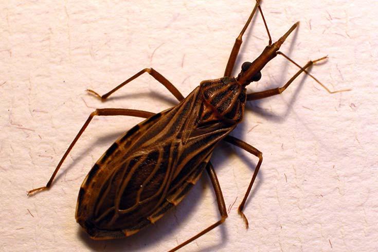 Informe-sobre-Chagas