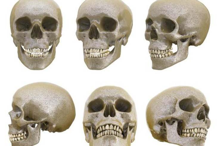 La-evolución-de-los-humanos-modernos.-Una-mirada-desde-el-desarrollo