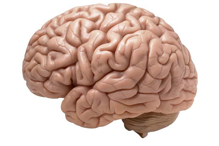 Las BDZ del cerebro