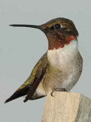 Sitios en que la Red Aves Internacionales estudia las aves migratorias.