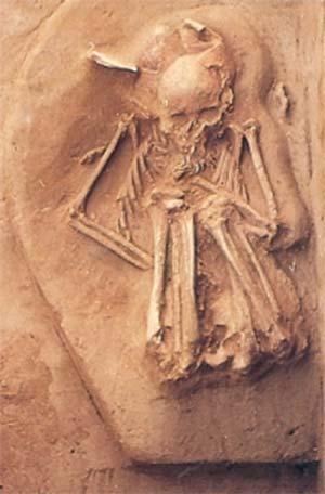 fig 15 Ultimo entierro humano hallado en el sitio. Corresponde a un niño cuya edad oscila entre los 10 y los 12 años, y presenta un collar formado por más de 30 colmillos perforados de cánidos.