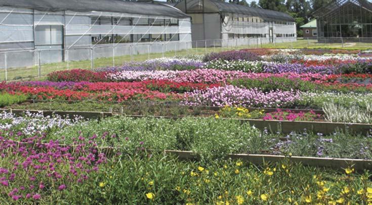 Parcelas experimentales con plantas nativas en el Instituto de Floricultura del INTA, en Hurlingham. Foto María Julia Pannunzio