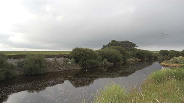 el río Quequén Grande en el paisaje actual de la llanura pampeana. En el centro de la fotografía, a la izquierda del matorral de árboles costeros, se advierte el sitio Paso Otero 4 excavado en la barranca. El río tiene unos 35m de ancho