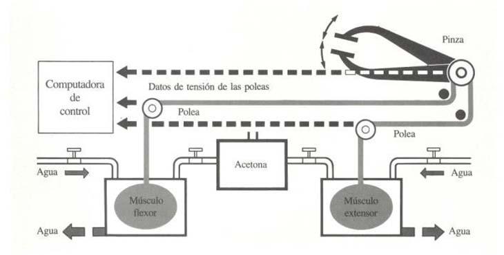 """Sistema mecanoquímico que permite reproducir la función de pinza de la mano por medio de """"músculos sintéticos"""". Los datos de la tensión en las poleas ingresan a la computadora, que controla y coordina las operaciones del mecanismo. (Adaptado de New Scientist.)."""