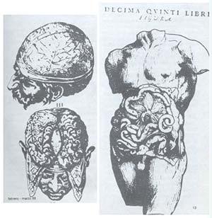 Grabados del libro de Andrea Vesalio De Corporis humani fabrica (1543). (Cortesía de la Biblioteca de la Facultad de Medicina de la Universidad de Buenos Aires).