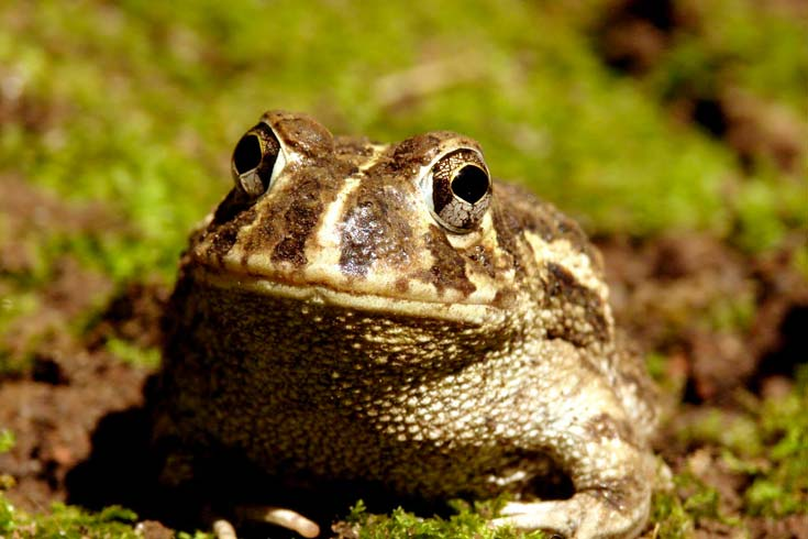Anfibios del Delta: Las Estrategias de la Reproducción