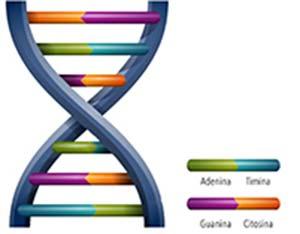 Estructura del ADN. Wikimedia Commons