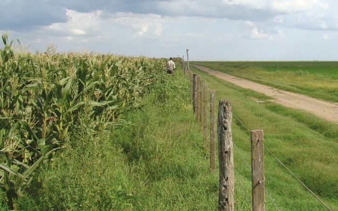 Agricultura orgánica y biodiversidad