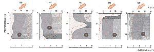 Fig 7. Distribución vertical de la clorofila (sector de color gris más claro, en todos los casos) y de la temperatura (línea de puntos) con el ascenso de las aguas profundas. El sector de color gris más oscuro (en los tres dibujos centrales) indica la posición de la termoclina, o zona en la que se registra la mayor variación de temperatura, que separa las aguas superficiales más calientes de las profundas frías. A) epoca de subsidencia: con vientos del sudoeste, luego del pasaje de un frente frío, y aguas calietnes de características tropicales, pobres  en nutrientes (menos de 1µ M de nitrato) y en fitoplancton (0.2 a 0,5 µg de clorofila por litro) B) Primer día de viento del nordeste despues del estado descripto en A, y comienzo del fenómeno de la surgencia, las aguas ricas en nutrientes (más de 10 µ M de nitrato), y la termoclina entra en la zona iluminada o eufótica, con lo que se inicia la proliferación de fitoplancton. C) Persiste el viento del nordeste y el agua fria continua ascendiendo, la luz más intensa ayuda a la multiplicación del fitoplancton en termoclina. D) Despues de tres o cuatro dias de viento nordeste, en verano, la termoclina llega a la superficie y se produce la situación de mayor densidad de fitoplancton (más de 5  µ g de clorofila por litro) cuando todos los organismos se concentran en una delgada capa de agua caliente que todavía cubre la masa fría subyacente. E) Intensidad máxima de la surgencia de aguas frías profundas, que ahora ocupan toda la columna de agua y llevan la temperatura a valores bajos (menos de 18º C con mínimos registrados de hasta 12 º C)