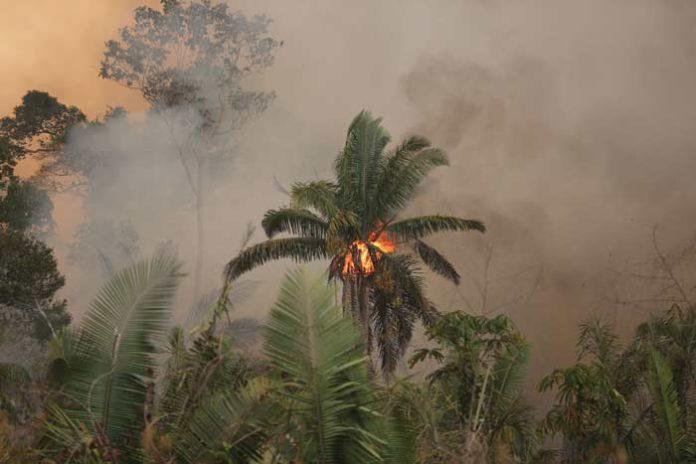 Los caminos del fuego en la Amazonia