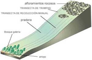 FIG3 Esquema en perspectiva de la zona de estudio en la Sierra de las Ánimas. Se muestra la ubicación de las transectas y de las distintas zonas ecológicas