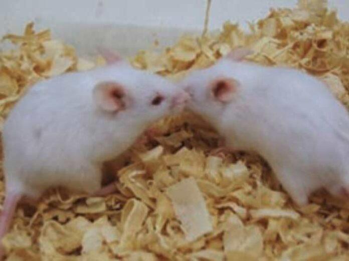 Animales modelo y el estudio del autismo