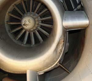 Daños producidos a una turbina de avión en el aeródromo de Campo de Mayo por un ave de tamaño medio, el carpintero campestre (Colaptes campestris).