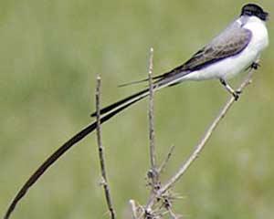 Las aves migratorias de América del Sur