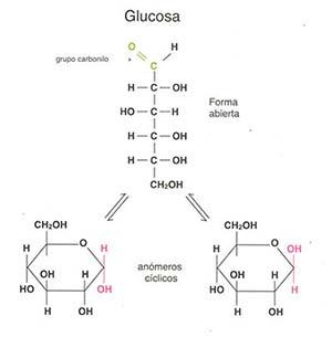 Figura 1: El azúcar reductor glucosa puede existir en forma abierta con un grupo carbonilo o cerrarse formando estructuras en anillo conocidas como anómeros cíclicos en los que ha desaparecido el grupo carbonilo. Solamente la forma abierta participa en las reacciones de glucosilación no enzimática de las proteínas.