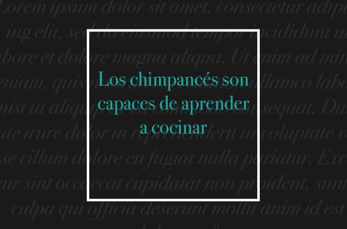 Los chimpancés son capaces de aprender a cocinar